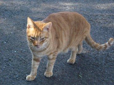 hirado_cat1