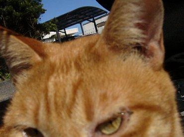 hirado_cat2