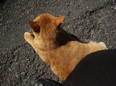 hirado_cat3