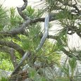 岡山城のヘビ