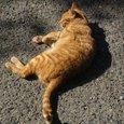 平戸城のネコ