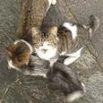 長崎のネコ2