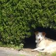 銚子のイヌ
