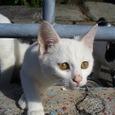 神岡のネコ