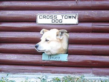 岩倉実相院のイヌ