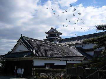 高知城のハト