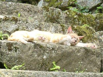 彦根城のネコ