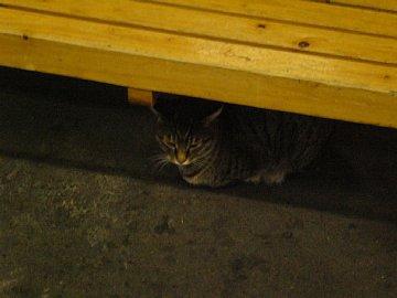 長崎駅のネコ