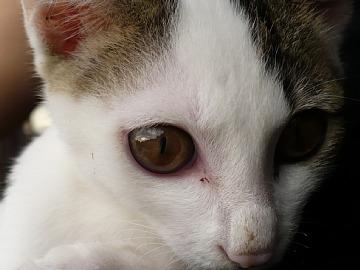 武家屋敷の子猫。