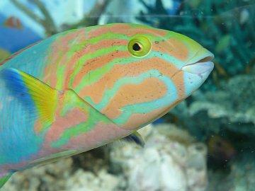 銀座の熱帯魚。