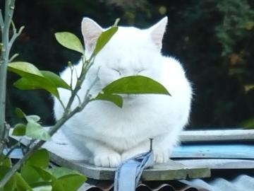 秋月のネコ