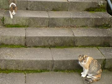 長崎のネコ