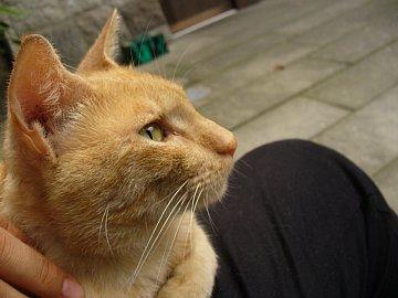 飫肥城のネコ