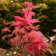 季節外れの紅葉。