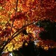 照らされた紅葉。