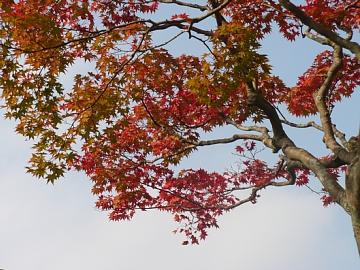 仙台の紅葉。