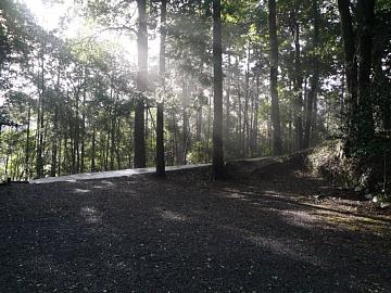 木洩れ日。