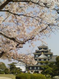 岡山城さくらver.
