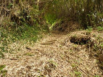 Bambooroot1