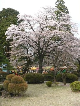 Yamanashi019