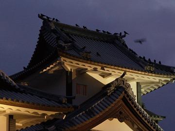 Kanazawacrow