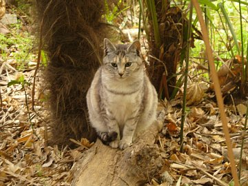 Kawagoe_cat1
